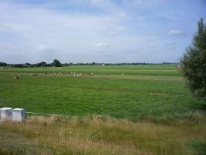 Wiesen- und Weideland zwischen Den Haag und Utrecht