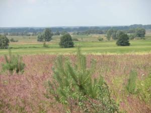 Naturschutzgebiet Hoher Fläming