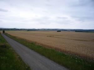 riesige Getreidefelder