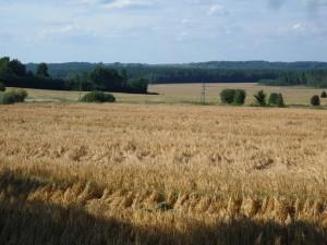 unendliche Felder und Wälder