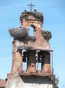 Störche lieben Glockentürme